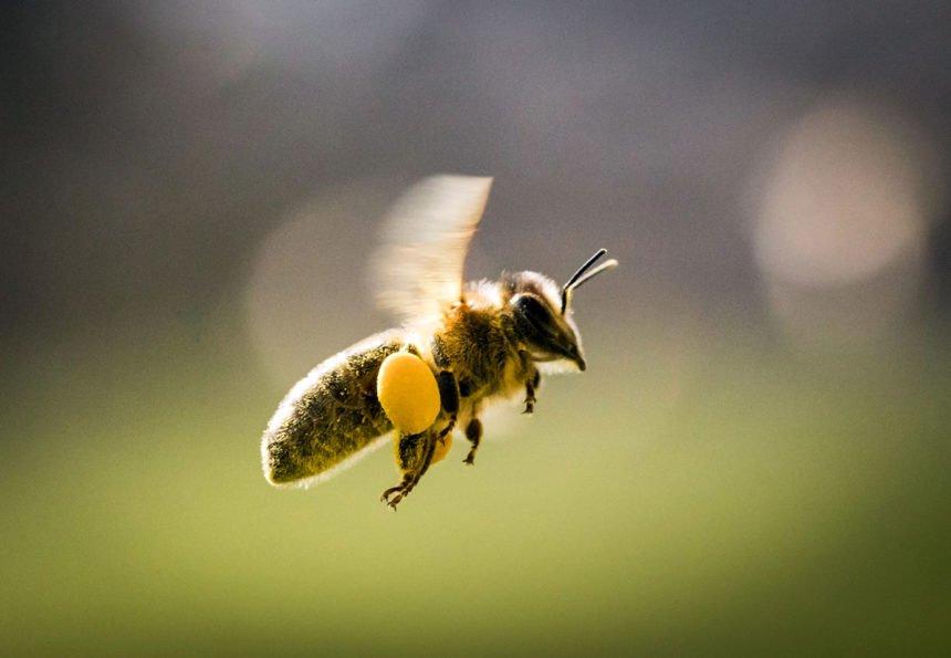"""Bayern fordern: """"Rettet die Bienen"""""""