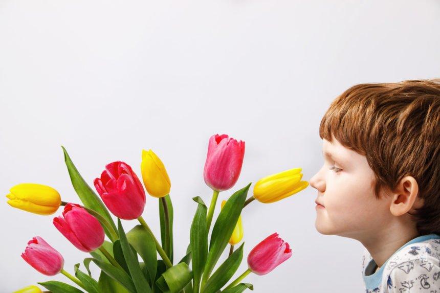 Tulpen wachsen weiter